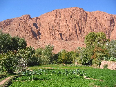 Fields near Todra Gorge